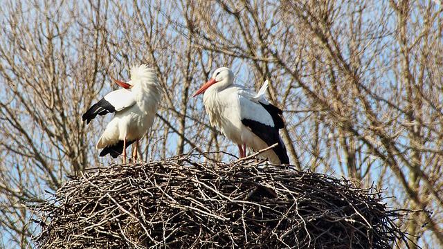 多摩動物公園 ニホンコウノトリの繁殖、30年連続成功