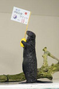 ラッコも伊勢志摩サミットを応援 鳥羽水族館