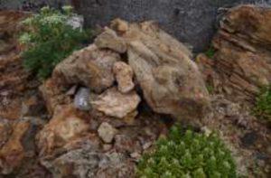 日本野鳥の会、カンムリウミスズメの人工巣による繁殖に世界初成功