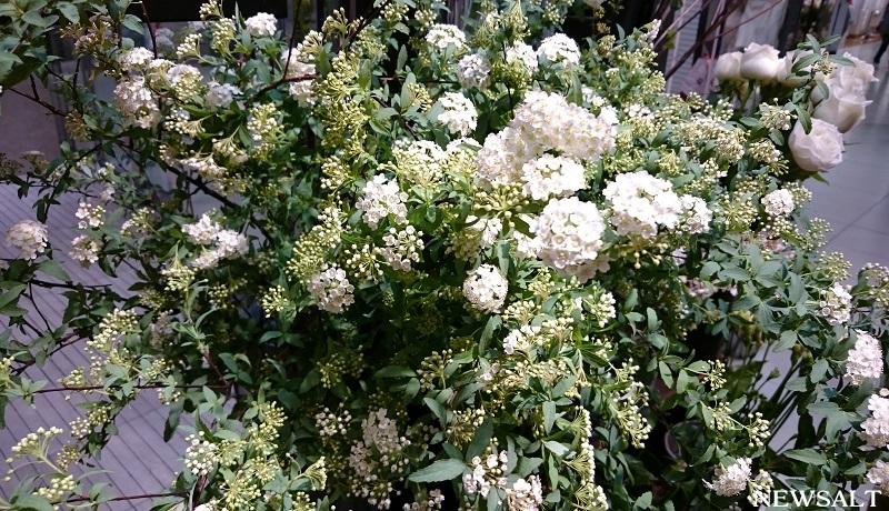 花便り~コデマリ