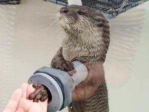 サンシャイン水族館2017年の福袋が話題 スタッフ体験やガンギエイ干物