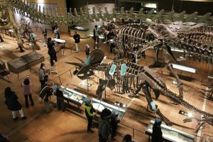 いのちのたび博物館、「恐竜すす払い」の参加者募集