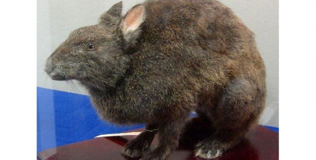 「Save the RED LIST」、アマミノクロウサギ保護ムービーの制作を支援