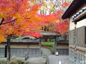 かつて「御泉水屋敷」と呼ばれていた名園 福井県 養浩館庭園