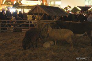 2016年ドイツクリスマス便り(2)キリスト生誕場面の主役が動物に……