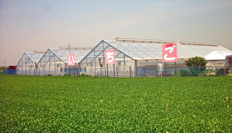 栃木銀行、いちご農家へ3000万円の出資を実施