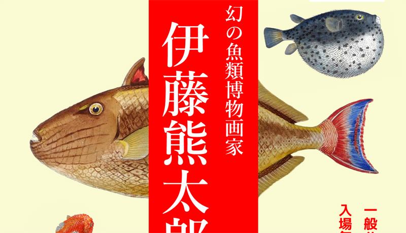幻の魚類博物画家の企画展開催 東京海洋大学付属図書館