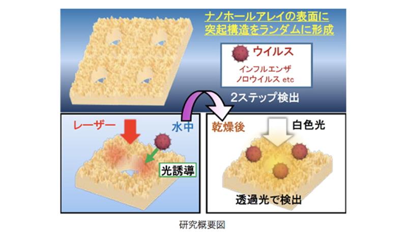 ウイルスの光検出感度が2倍に 大阪府立大の研究チームが成果