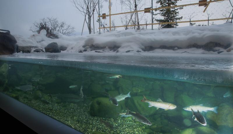 北の大地水族館の四季の水槽が完全結氷