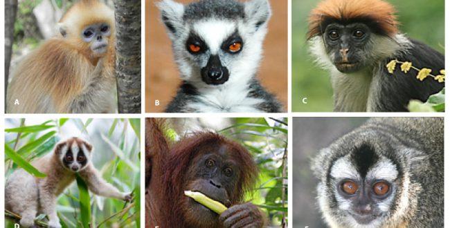 霊長類の約60%が絶滅の危機
