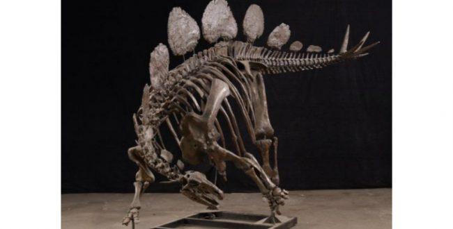 化石の組み上げ作業を全面公開 福井県立恐竜博物館