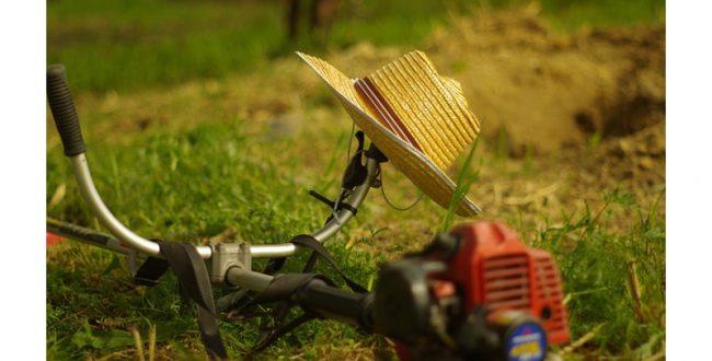 草刈りの匂いが作物の防衛力を強化する ダイズで実証