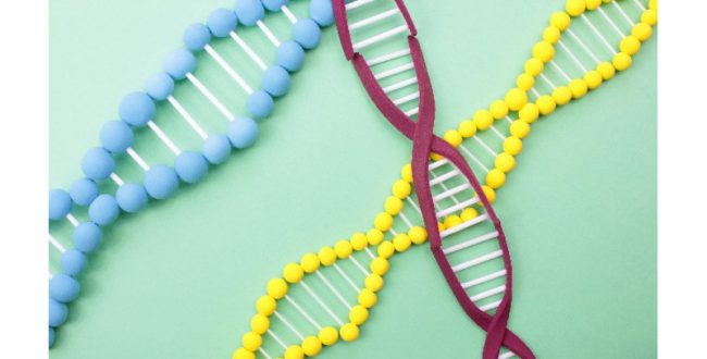 10分で遺伝子検出できるモバイル検査機器を開発 日本板硝子