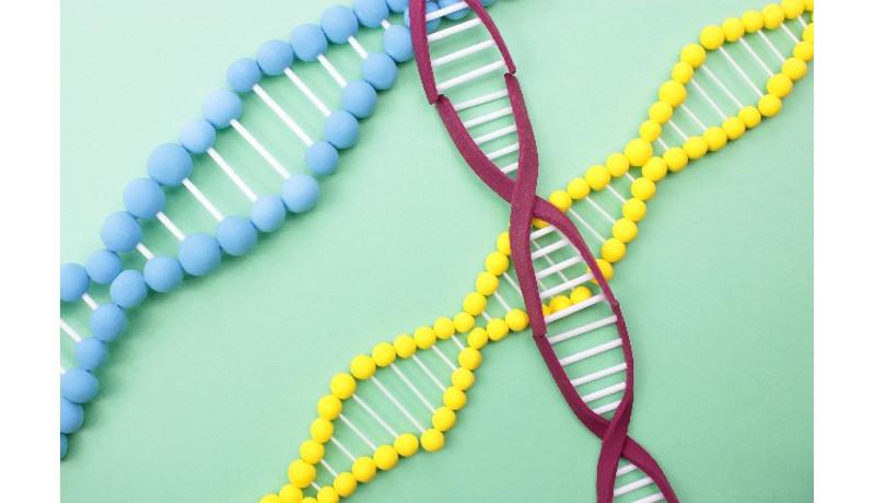 10分で遺伝子検出できるモバイル検査機 日本板硝子、産総研など