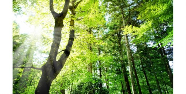 第3回「日本自然保護大賞」 富士通のシマフクロウ生息保全支援など8組が受賞