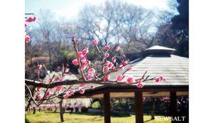 大倉山梅林 4,梅と小屋