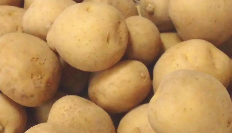 火星でジャガイモを栽培できるか? 火星似の砂漠土で実験