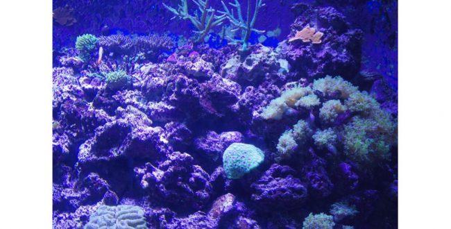環境省、海洋生物のレッドリストを新たに更新
