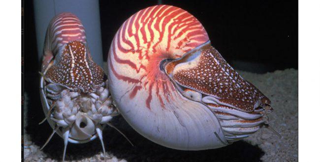 鳥羽水族館、パラオ国際サンゴ礁センターと友好協定締結