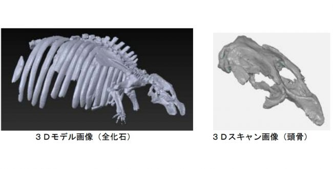 3Dデータ化 ヤマガタダイカイギュウ化石