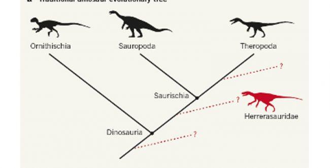 恐竜の分類「見直し」か? 英研究チームが74種の血縁評価
