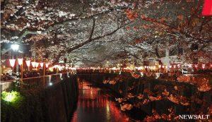 桜(写真2)
