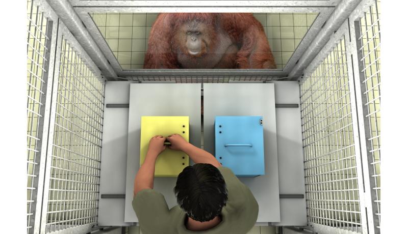 大型類人猿も、他者の誤った思い込みを見分けて手助けする