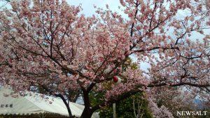 桜特集(4)