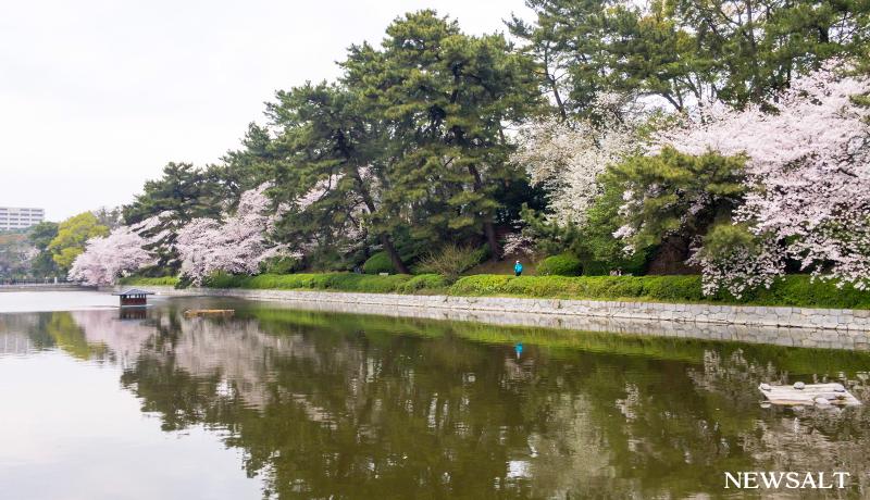 2017年桜特集(5)