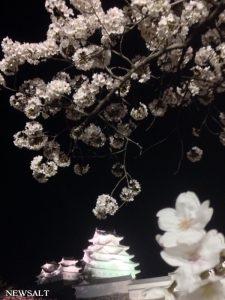 桜特集(5)