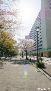 桜特集(7)