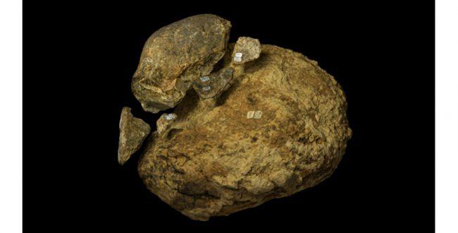 13万年前のアメリカ大陸に暮らしたヒト族