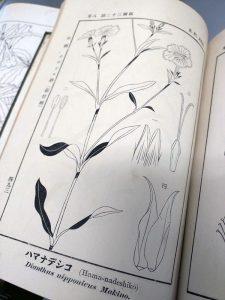 4月24日は「植物学の日」~日本の植物分類学の父・牧野富太郎