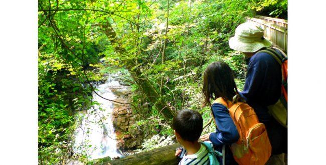 日本の美しい森を多くの人に お薦めの国有林を選定 林野庁