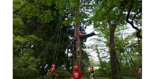 新緑を樹上から体験! ツリークライミング