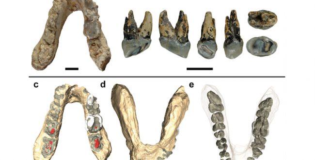 最古の人類はアフリカではなくヨーロッパだったのか?