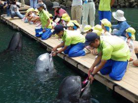 「クジラの歯みがき」公開 和歌山県くじらの博物館