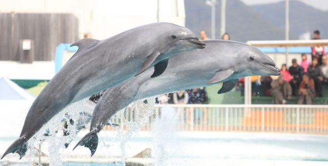 イルカと一緒に泳げる「ワンダフルドルフィン」 鴨川シーワールド