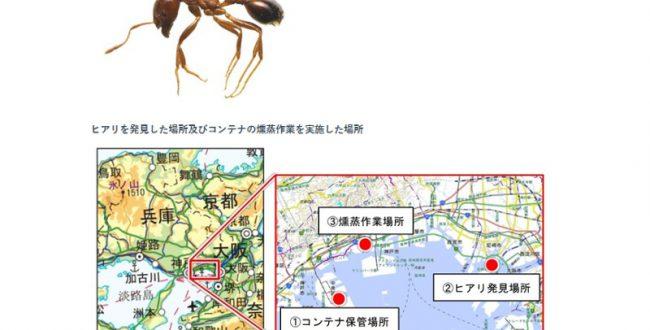 特定外来生物ヒアリ、尼崎に次いで神戸で確認