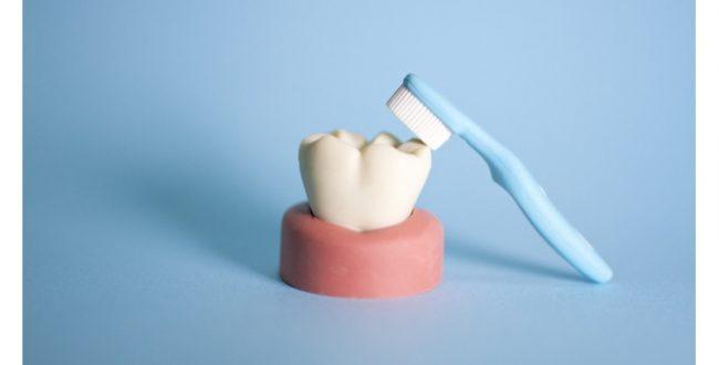 歯の健康と健康長寿の関係 東北大が調査