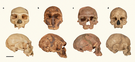 30万年前のホモ・サピエンスの化石 モロッコで発見