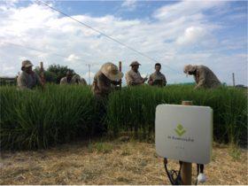 日本のIoT技術でコロンビアの稲作を支援