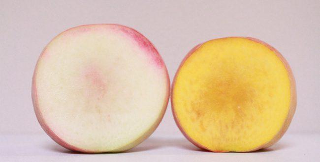 黄色い桃の時代到来? 品種改良で誕生した「幻の桃」、8月が旬