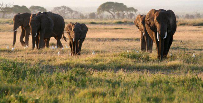 インターネットでの象牙の取引高、月4500万円超に WWFが調査