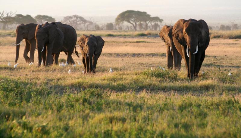 ネットでの象牙取引高、月4500万円超に WWF調査