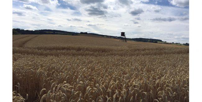 温暖化が穀物生産性に悪影響