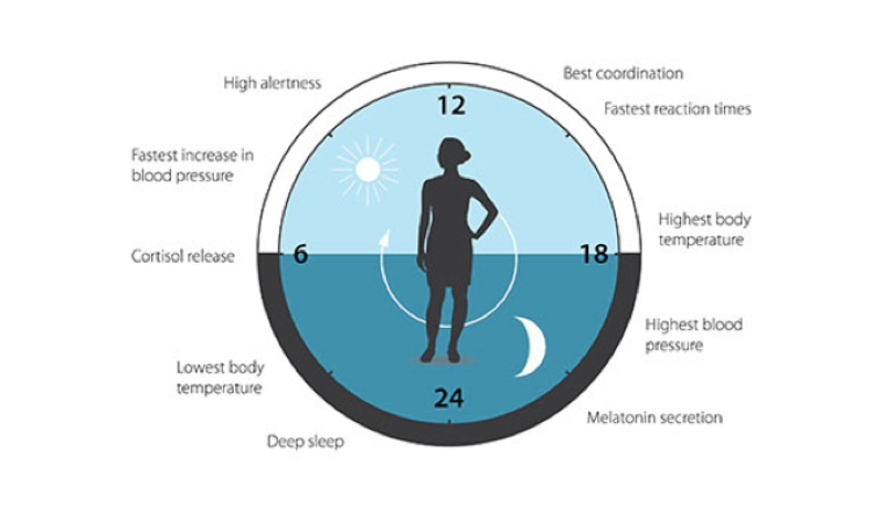 【ノーベル賞2017】生理学・医学賞に米国の3人 「体内時計」仕組み解明
