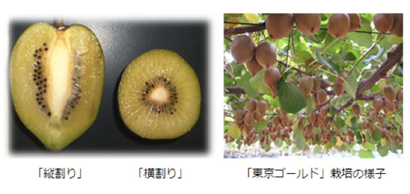 東京×農業?! 知られざる東京生まれの農産物