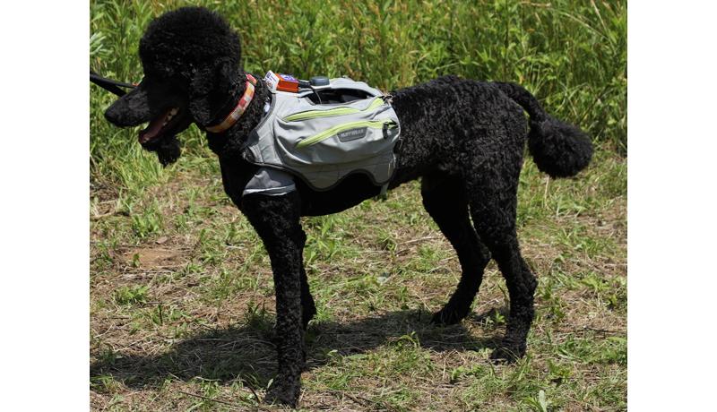 災害救助犬用サイバースーツを世界初開発 東北大学など