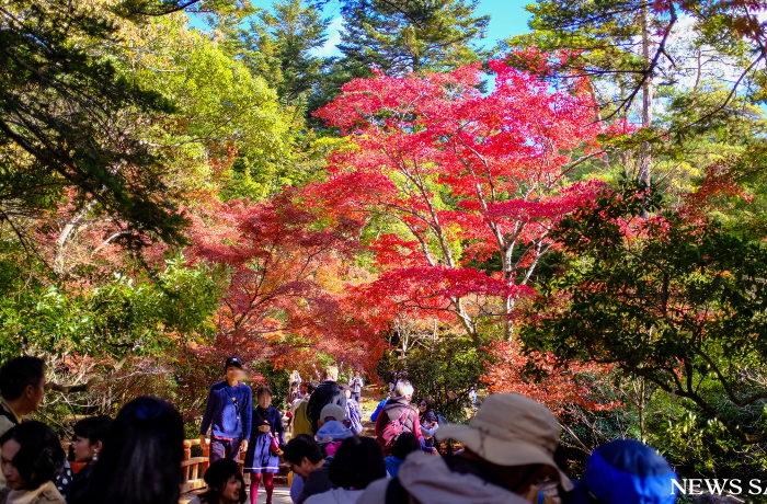 2017年紅葉便り~宮島の紅葉谷公園